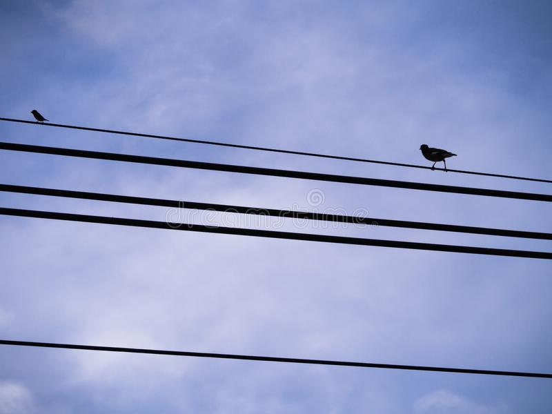 El pájaro grande sigue el pequeño pájaro en el alambre imagen de archivo