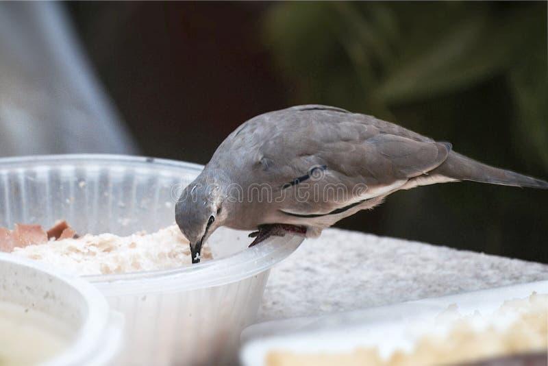 El pájaro primero mira imagen de archivo