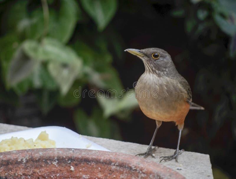 El pájaro primero mira foto de archivo