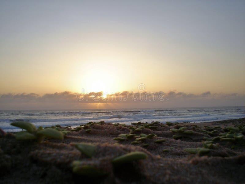 El pájaro temprano de la playa de la bahía de Kosi de la salida del sol coge el gusano fotos de archivo
