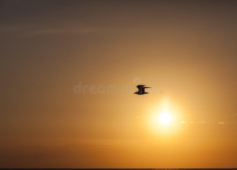 El pájaro vuela sobre el océano en la salida del sol imagenes de archivo