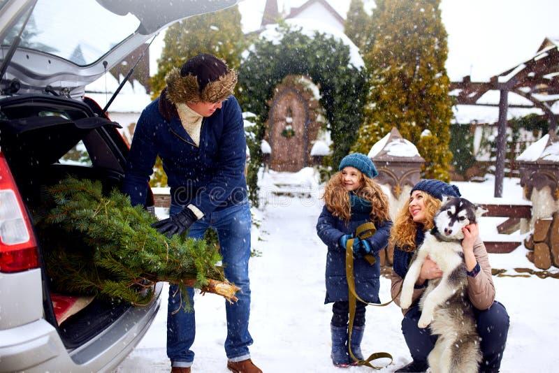 El padre trajo el árbol de navidad en el tronco del coche de SUV a la hija, a la madre y al perro para adornar a casa La familia  imagenes de archivo