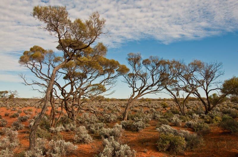 El paisaje australiano imagenes de archivo