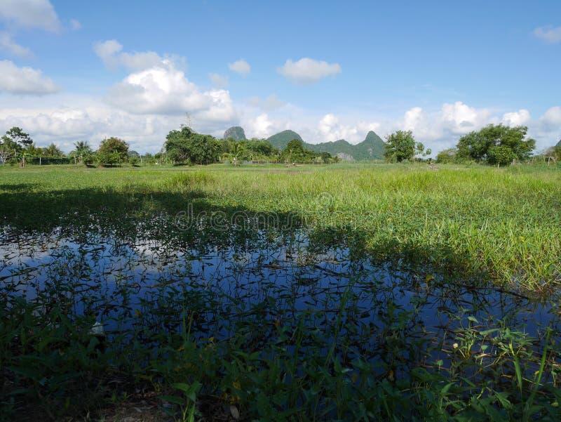 El paisaje de crece las cosechas y los estanques de peces naturales de la acuicultura imagen de archivo