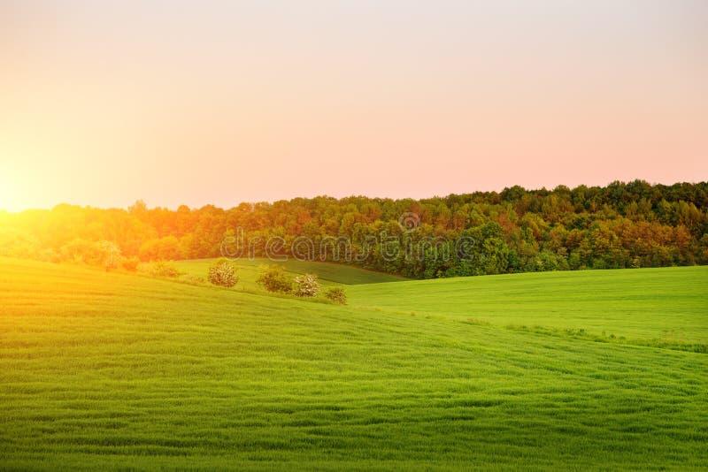 El paisaje de la mañana con el campo verde, rastros de tractor en sol irradia fotografía de archivo
