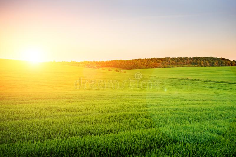 El paisaje de la mañana con el campo verde, rastros de tractor en sol irradia fotos de archivo libres de regalías