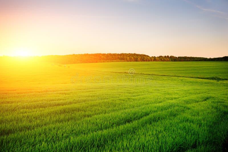El paisaje de la mañana con el campo verde, rastros de tractor en sol irradia imagen de archivo libre de regalías