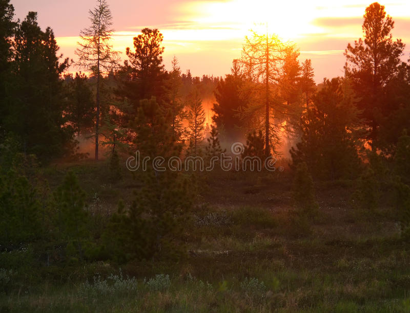 El paisaje de la naturaleza septentrional Bosque en la puesta del sol imagen de archivo