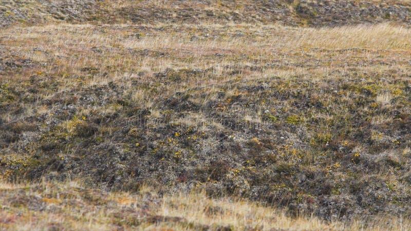 El paisaje de la primavera con las flores salvajes del campo florece, paisaje de la naturaleza vídeo Flores salvajes en un campo  imagen de archivo