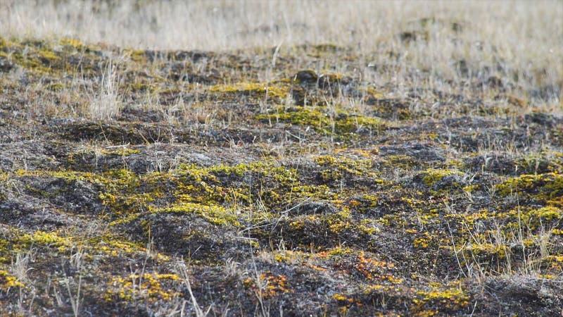 El paisaje de la primavera con las flores salvajes del campo florece, paisaje de la naturaleza vídeo Flores salvajes en un campo  fotos de archivo libres de regalías