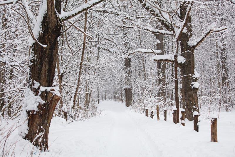 el paisaje del bosque del invierno, árboles cubrió nieve fotografía de archivo libre de regalías