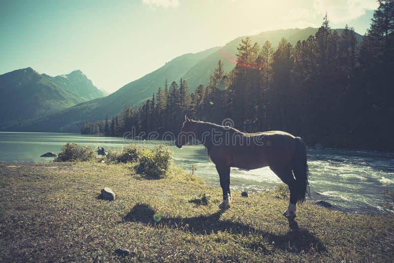 El paisaje del lago hermoso de la montaña con el caballo en las montañas de Altai en fondo, en verano, Siberia, montaña de Altai foto de archivo libre de regalías