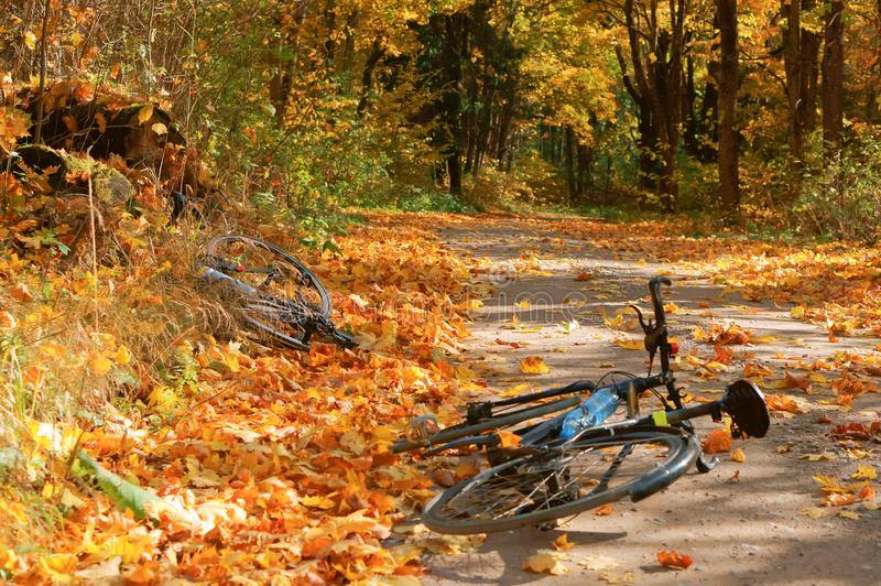 El paisaje del otoño, camino forestal en hojas de otoño, dos bicis está en el camino fotos de archivo
