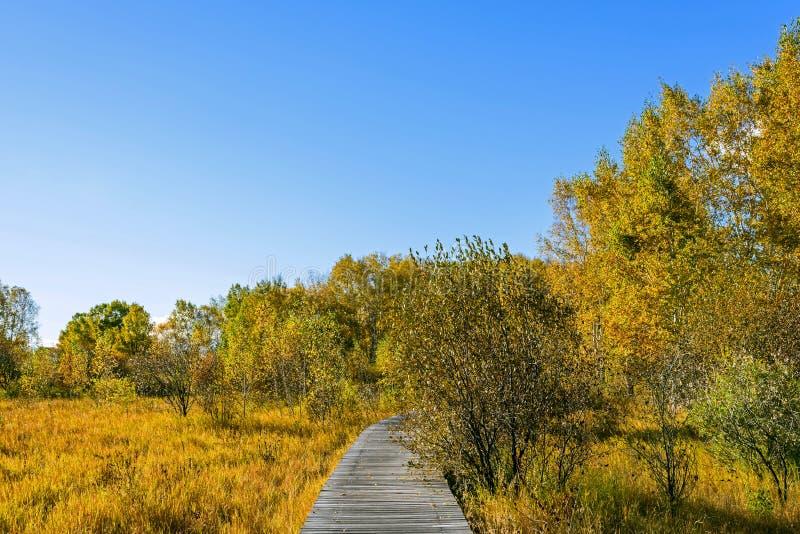 El paisaje del otoño de la pradera foto de archivo libre de regalías