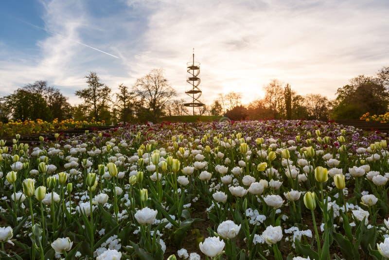 El paisaje del parque de Stuttgart Killesbergturm florece la primavera April Bea foto de archivo