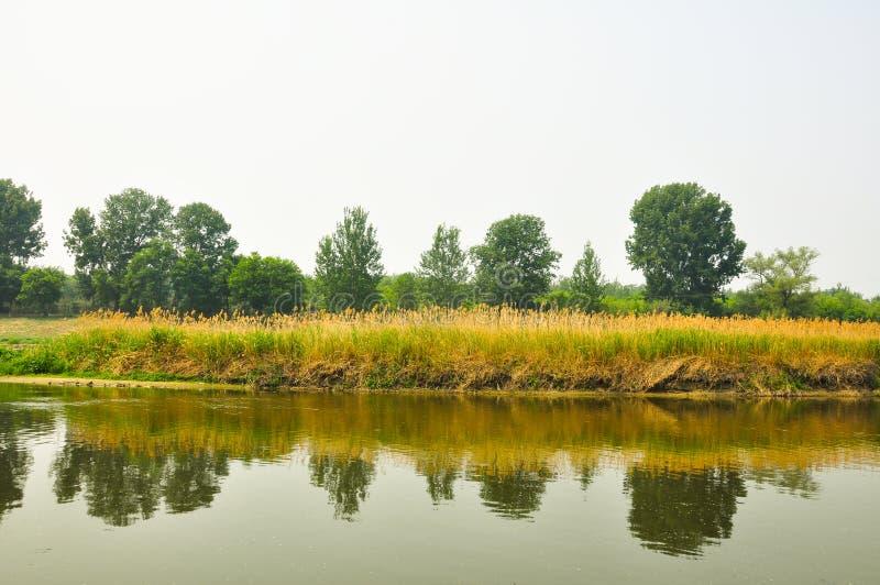 El paisaje del verano de un río fotografía de archivo libre de regalías