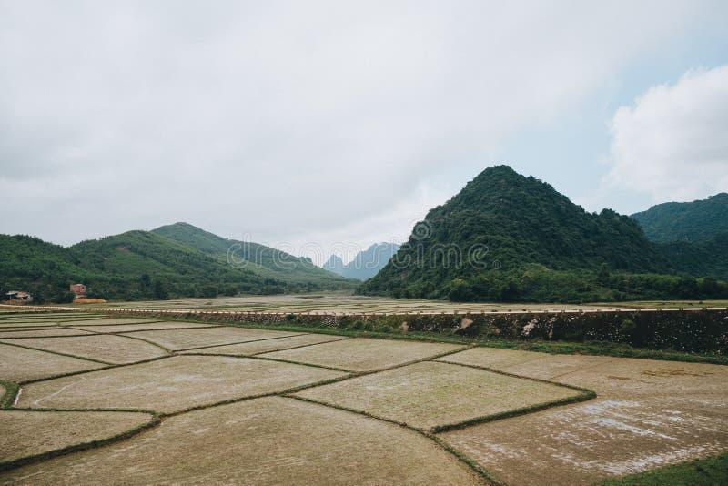 el paisaje hermoso con las montañas verdes y los campos de arroz en Phong Nha KE golpean a nacional imagen de archivo