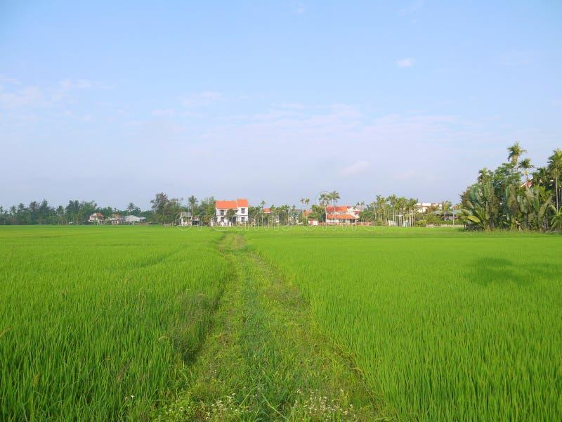 El paisaje hermoso del arroz verde joven coloca con las casas de tejado de teja roja típicas en Hoi An fotos de archivo