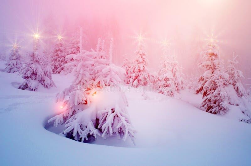 El paisaje místico del invierno con los árboles en las luces de la Navidad brilla foto de archivo libre de regalías