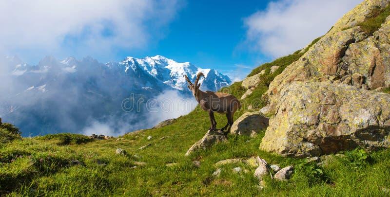 El paisaje místico del shee de la montaña cerca de Mont Blanc en la F imágenes de archivo libres de regalías