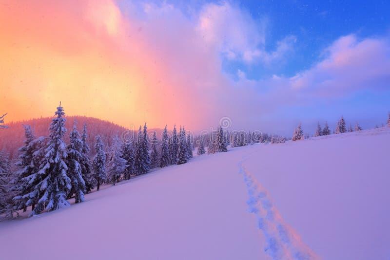 El paisaje maravilloso se abre en la puesta del sol y el cielo color de rosa del césped por completo de árboles nevosos agradable foto de archivo libre de regalías