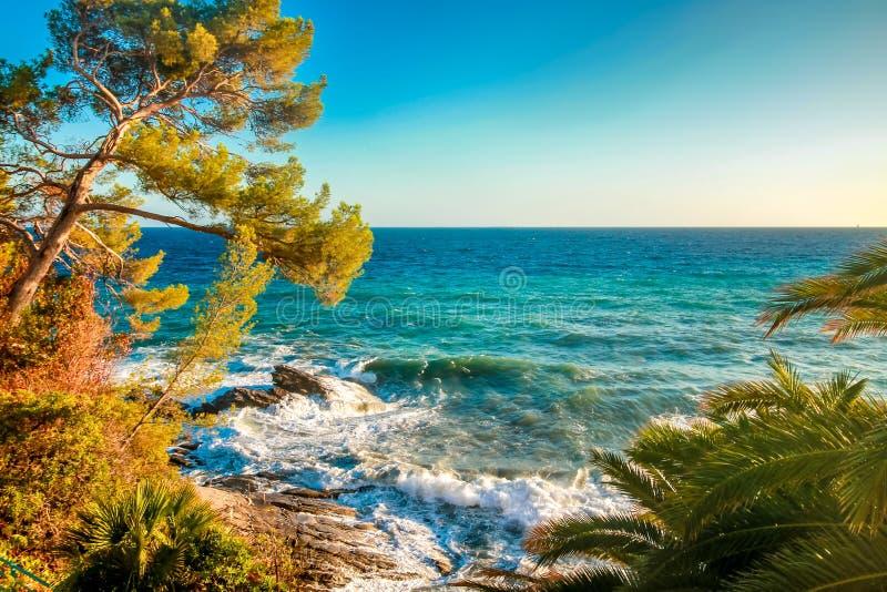 El paisaje marino con el árbol de pino y el océano azul riegan foto de archivo