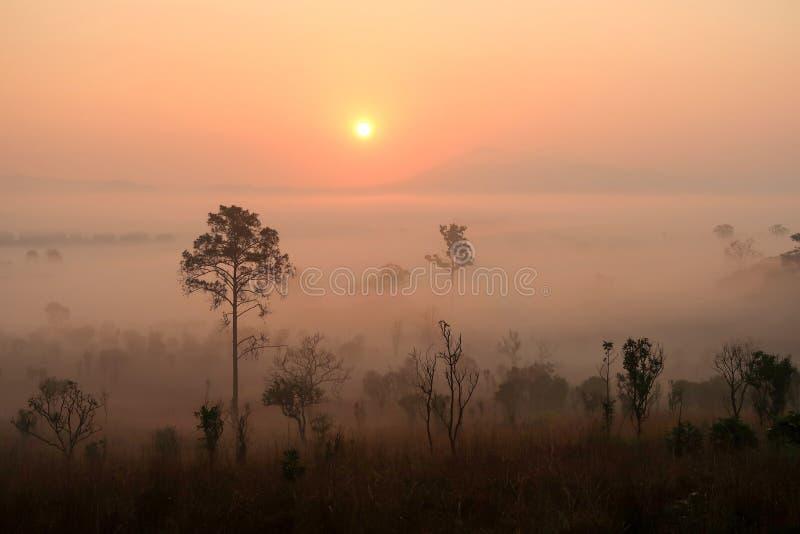 El paisaje natural de montañas con brumoso y salida del sol imágenes de archivo libres de regalías