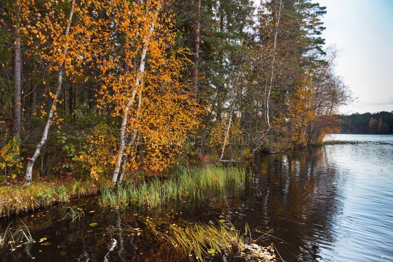 El paisaje otoñal con amarillo se va en threes y aún el lago fotografía de archivo