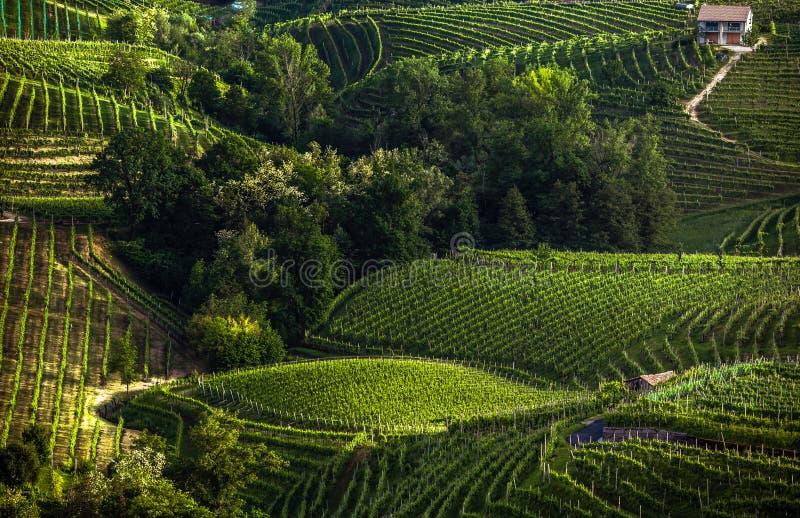 El paisaje pintoresco por completo de viñedos alrededor de la ciudad de V fotografía de archivo libre de regalías