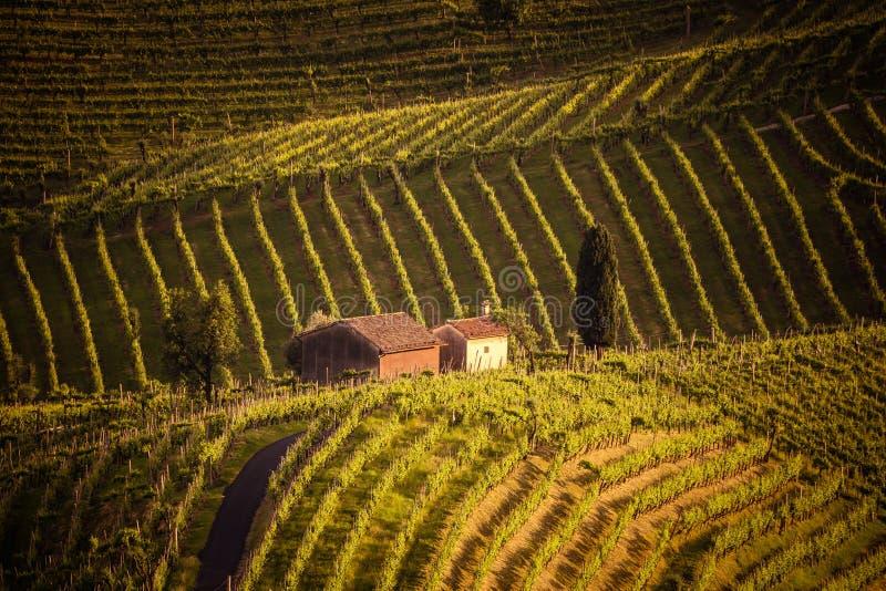 El paisaje pintoresco por completo de viñedos alrededor de la ciudad de V imagenes de archivo