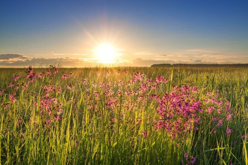 El paisaje rural del verano con un prado y la floración florece fotografía de archivo