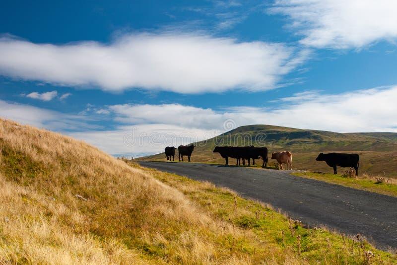 El paisaje típico en los valles parque nacional, Gran Bretaña de Yorkshire foto de archivo libre de regalías