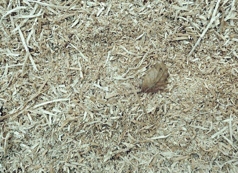 El pajote orgánico natural con los pedazos de madera raspa y las hojas imagen de archivo libre de regalías