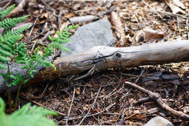 El palillo con ahuecado corta a través carcomas Un modelo natural hermoso en madera fotografía de archivo libre de regalías