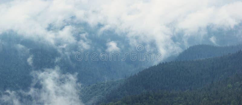 El panorama de la montaña con el bosque y la niebla coníferos se nubla después de lluvia imagen de archivo