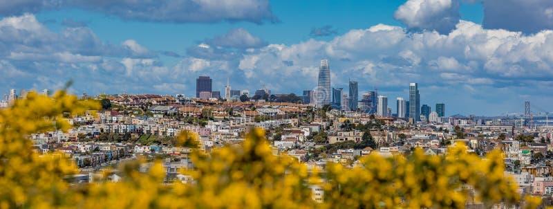 El panorama del horizonte de San Francisco con la floración florece en la delantera fotografía de archivo