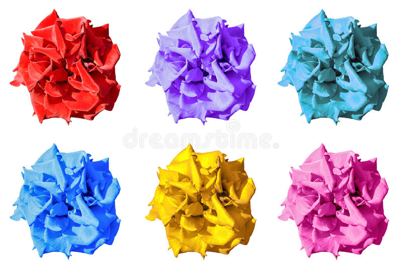 El paquete de la maravilla exótica oscura surrealista coloreada florece macro aislada fotografía de archivo