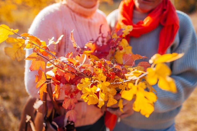 El par de mediana edad que sostiene el ramo de otoño ramifica con las hojas amarillas y del rojo La gente abraza al aire libre foto de archivo