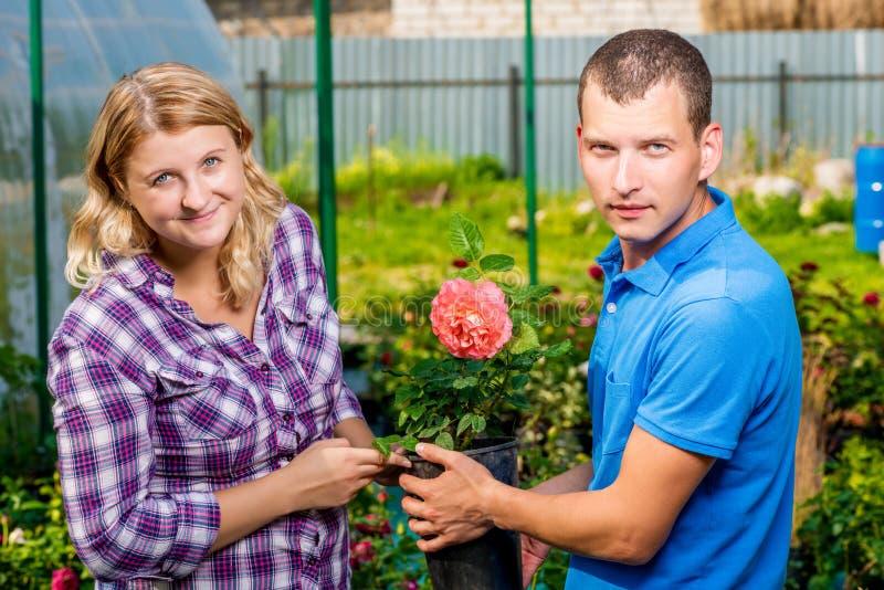 El par joven selecciona almácigos de flores fotos de archivo