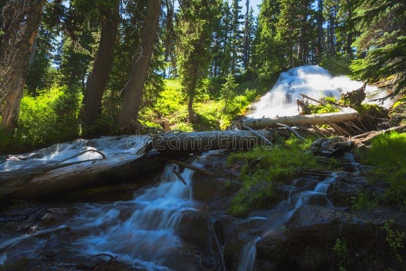 El paraguas cae Mt Hood National Forest imagen de archivo