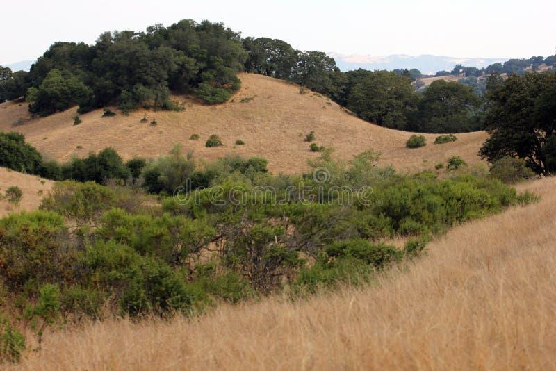El parque de Shiloh Ranch Regional The incluye los arbolados del roble, bosques de los árboles de hoja perenne mezclados, cantos  imagen de archivo