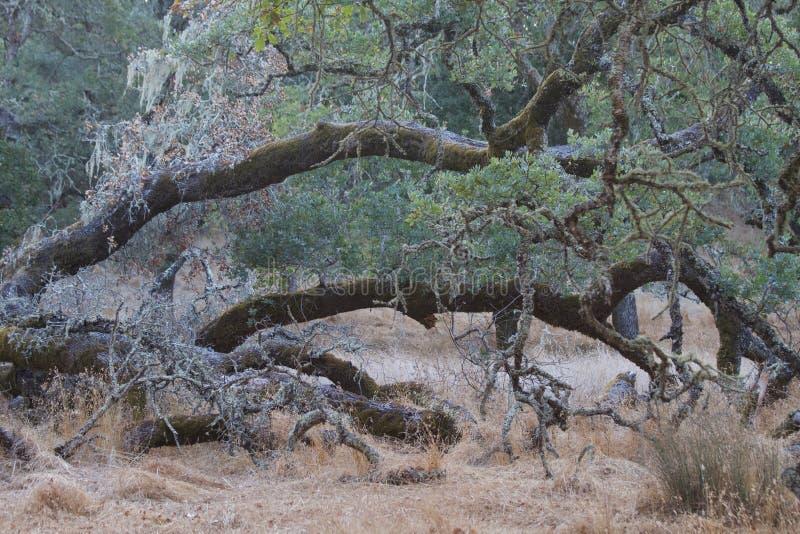 El parque de Shiloh Ranch Regional The incluye los arbolados del roble, bosques de los árboles de hoja perenne mezclados, cantos  imagen de archivo libre de regalías