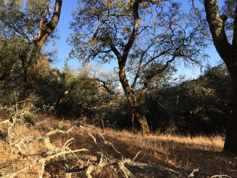 El parque de Shiloh Ranch Regional The incluye los arbolados del roble, bosques de los árboles de hoja perenne mezclados, cantos  imágenes de archivo libres de regalías