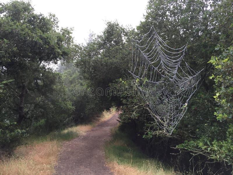 El parque de Shiloh Ranch Regional The incluye los arbolados del roble, bosques de los árboles de hoja perenne mezclados, cantos  foto de archivo