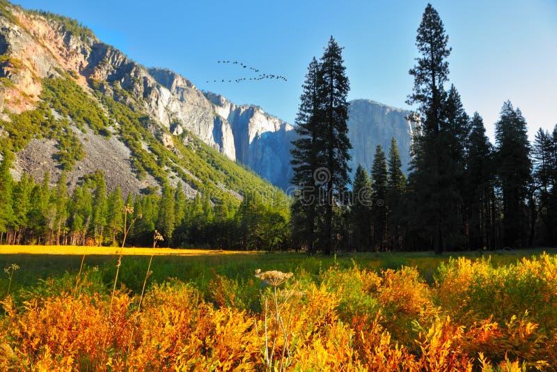 El parque de Yosemite foto de archivo libre de regalías
