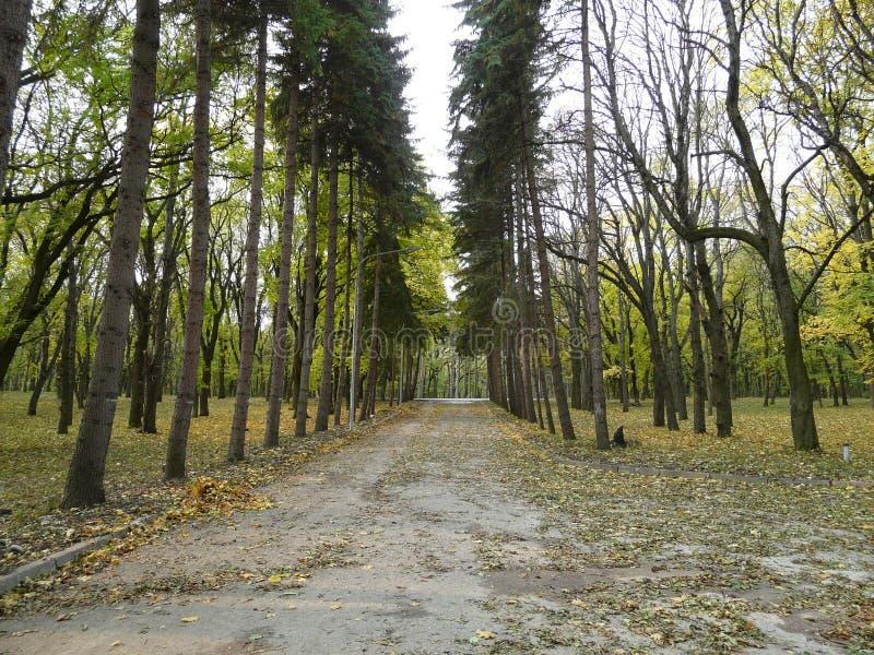 El parque del centro turístico en el Cáucaso imagen de archivo