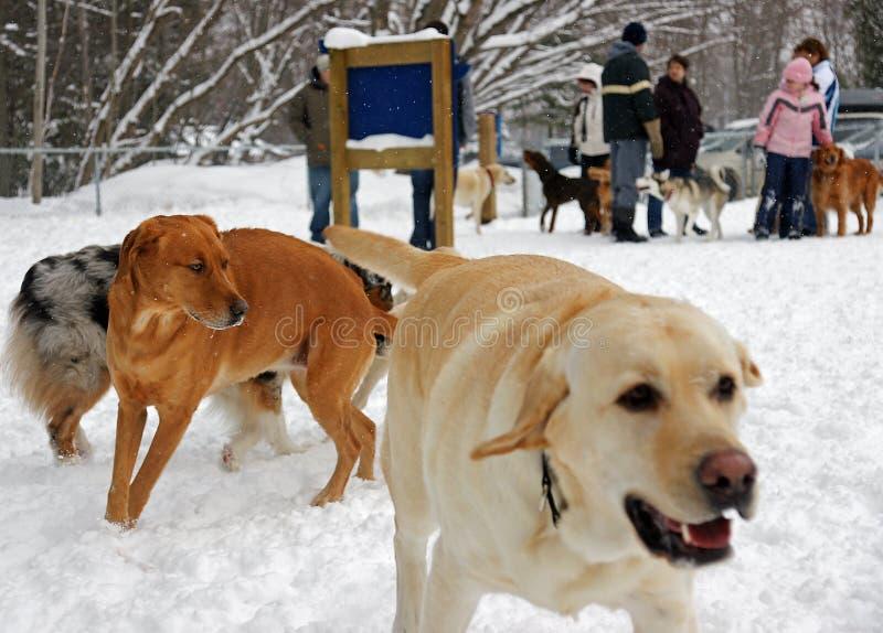 El parque del perro foto de archivo libre de regalías