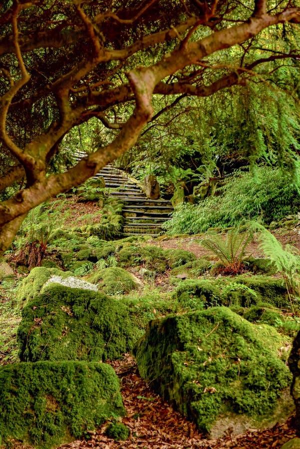 El parque nacional del distrito del lago, helechos del bosque foto de archivo libre de regalías