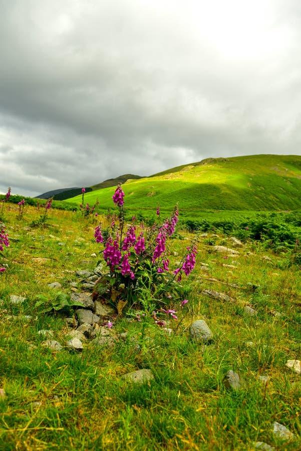 El parque nacional del distrito del lago imagen de archivo libre de regalías