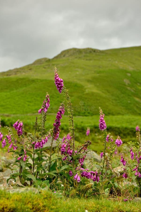 El parque nacional del distrito del lago fotos de archivo libres de regalías